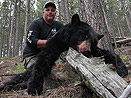 Wyoming Black Bear