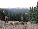Colorado Bull Elk and Rocky Mtn. scenery