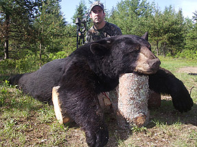 Quebec Black Bear