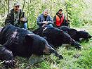 Quebec Black Bears